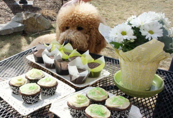 Dunlop trying to sneak up on the cupcakes...