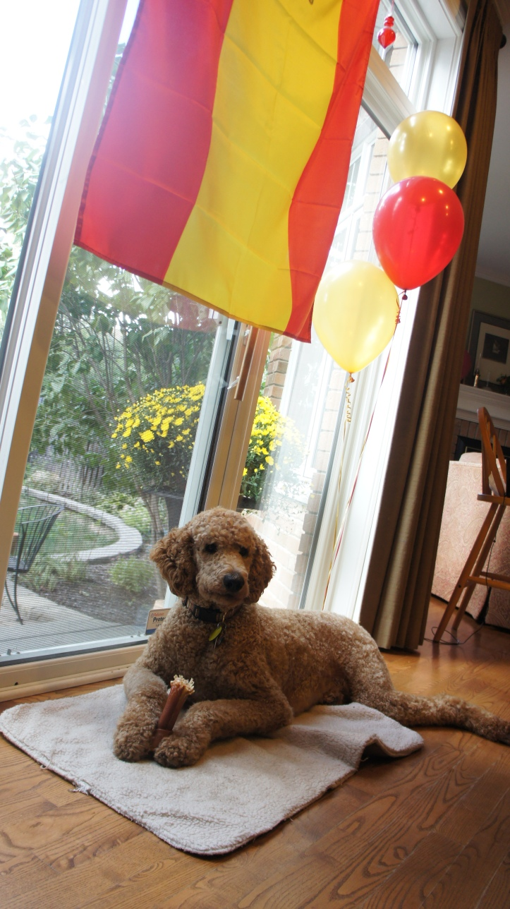Dunlop enjoying some of the party decorations the next morning.