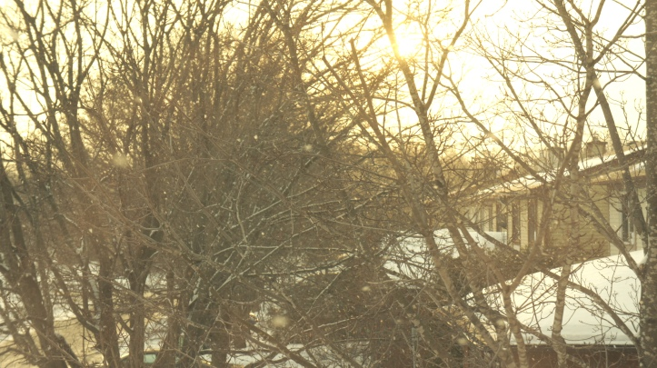 winterlight1