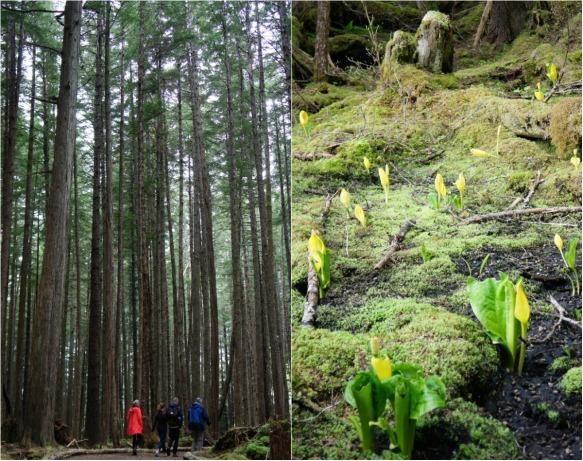 alaska forest