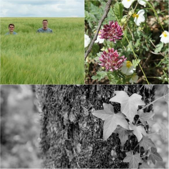 bourgogne flora&fauna