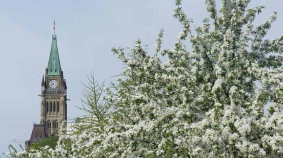 peace tower in bloom